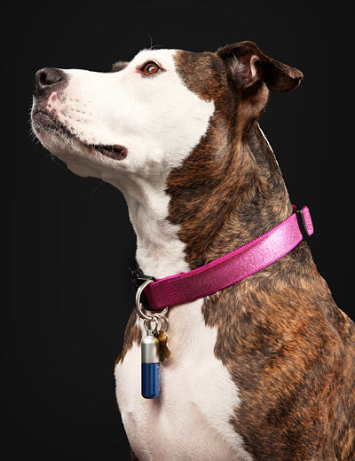 flexi pc pet id tag <span class=