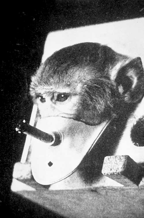 smoking experiment on monkey