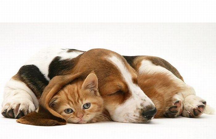 1234544980YTIAqJe cat and dog