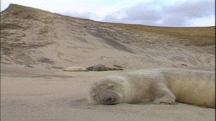 ns-sable-seals