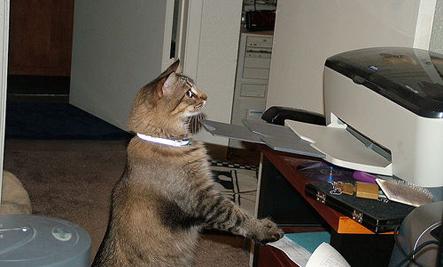 cat-and-printer-2